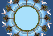 """Twelve Palms"" Photo credit: J. Luick"