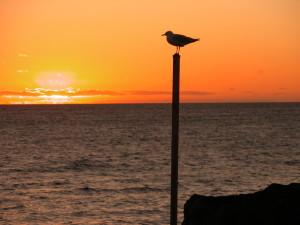 gull-pole4