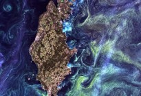 Sweden Phytoplankton Bloom