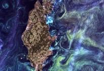 Sweden Phytoplankton Bloom